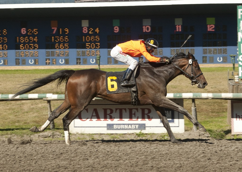 KOFFEE GRINDER WINNING BC CUP STELLARS JAY - PHOTO BY FOUR FOOTED FOTOS