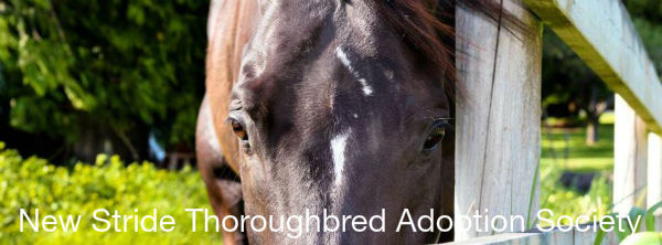 New_Stride_Thoroughbred_Adoption_Society1357328332