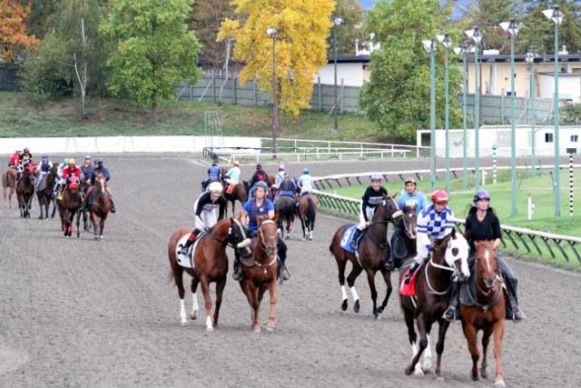 POST PARADE AT HASTINGS ON SUNDAYS SIXTH RACE - PHOTO BY JACKIE HUMBER