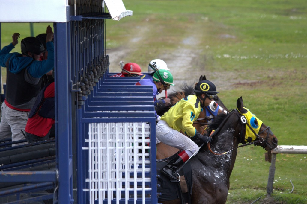 AND AWAY THEY GO - STARTING GATE PHOTO ON SUNDAY BY LISA THOMPSON