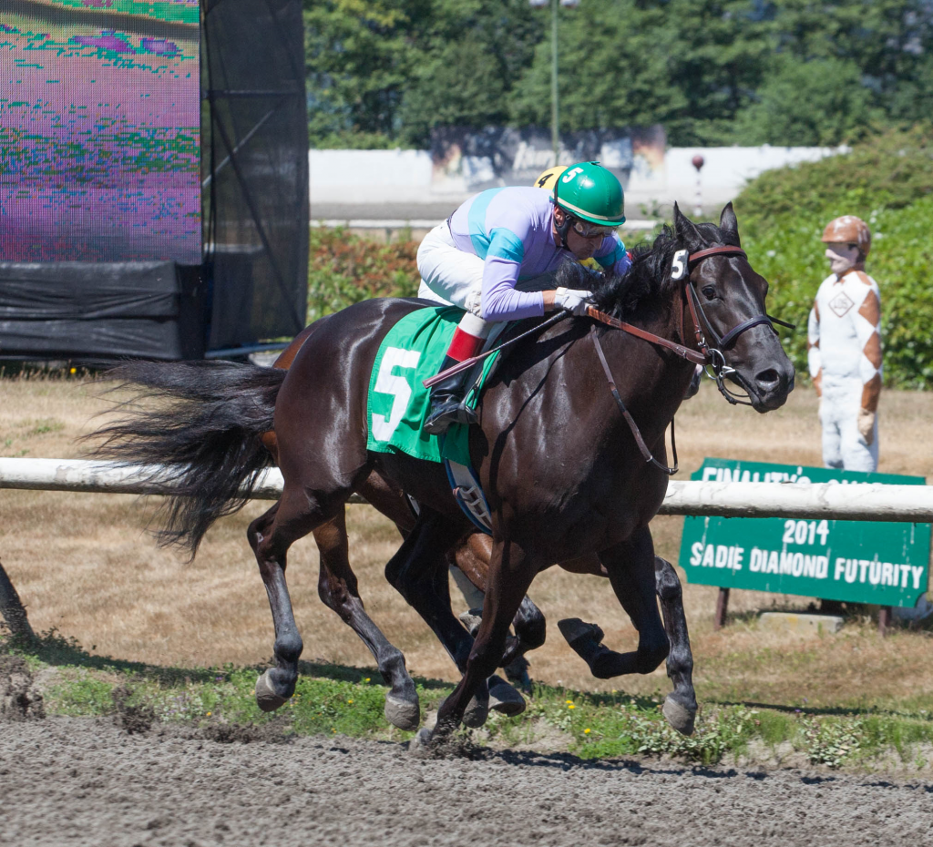 Colleens Diamond seen here winning the 2nd race on Saturday at Hastings - Patti Tubbs Photo