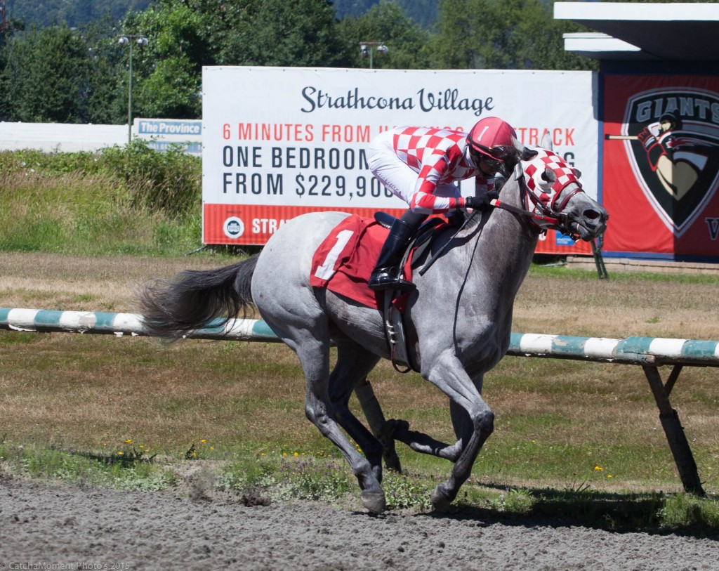 Texas Alley Cat took the 3rd race over the Nursery Course for 2 year olds