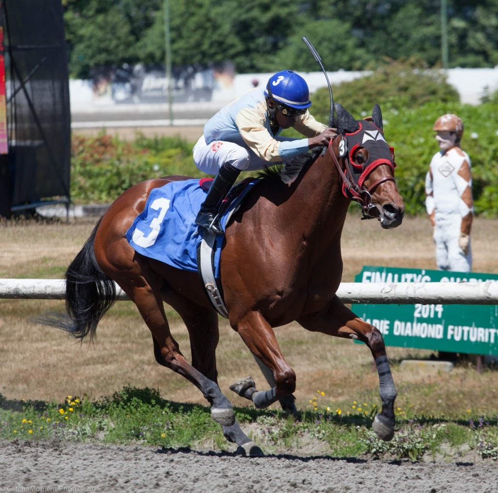 Kiss Em Goodbye was the winner of the opener at Hastings on Father's Day - Patti Tubbs Photo