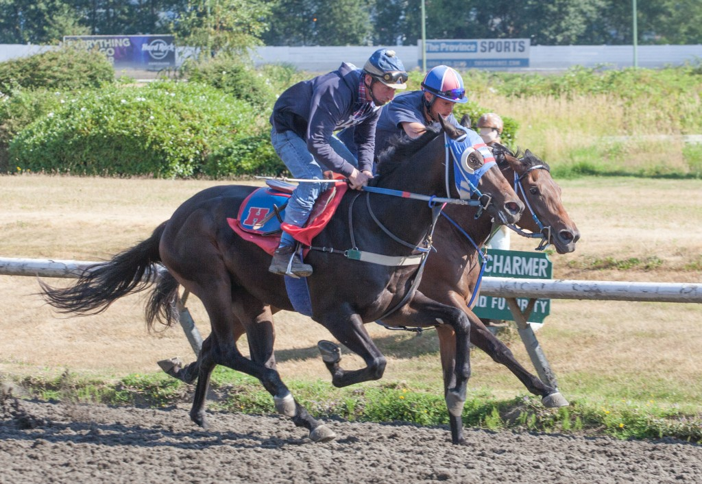 Hastings Racing Club Urban Achiever seen here on Sunday morning working in company - Patti Tubbs Photo