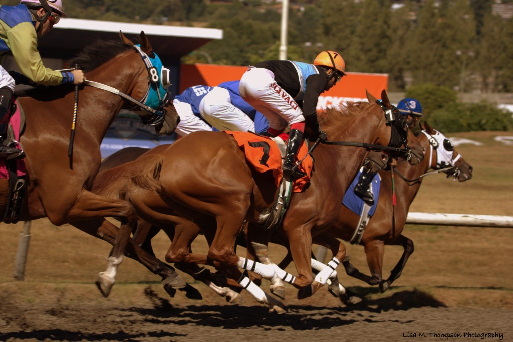 GREAT PHOTO DURING THE RUNNING OF THE 6TH RACE WON BY CYCLONE CINDY - LISA THOMPSON PHOTO