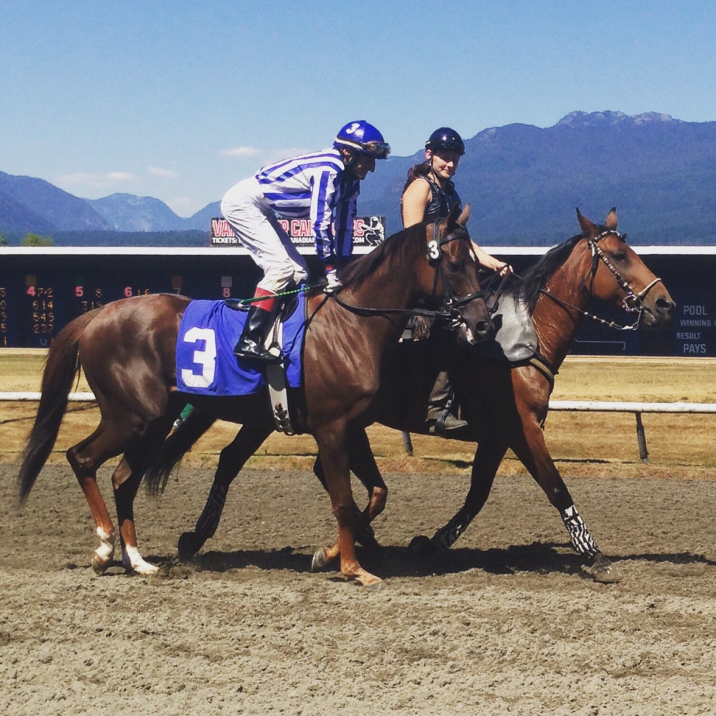 SQUARE DANCER FIRST RACE FOR HASTINGS RACING - PERFECT MATCH BLUE AND WHITE STRIPS WITH THE BLUE CAP AND THE NUMBER 3 BLUE SADDLE CLOTH