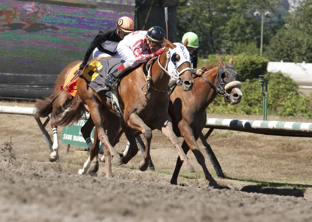 C U AT EAU CLAIRE winning the BC Cup Debutante at Hastings Racecourse with jockey Richard Hamel up. Four Footed Foto