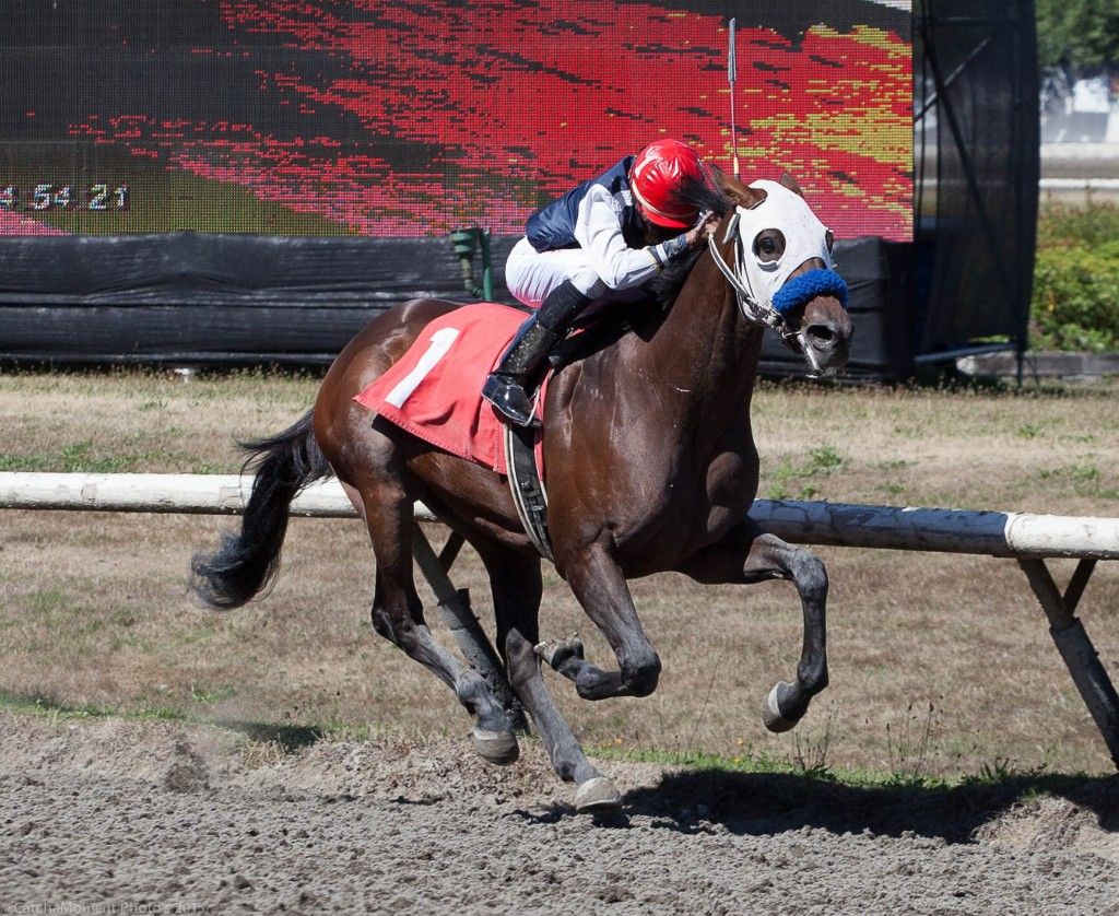 ROCK CONCERT ROCKED THE FIELD IN 3RD WINNING BY 9 1/4 LENGTHS - PATTI TUBBS PHOTO