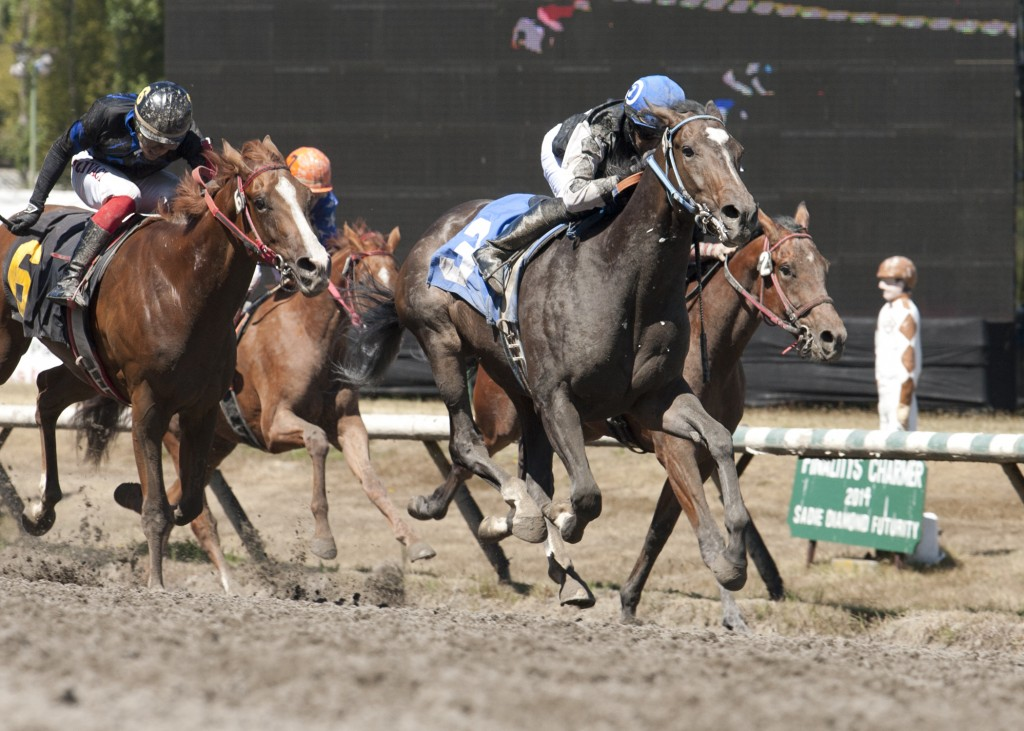Stanz In Command winning the BC Cup Nursery stakes at Hastings Racecourse with jockey David Lopez up. - Four Footed Foto