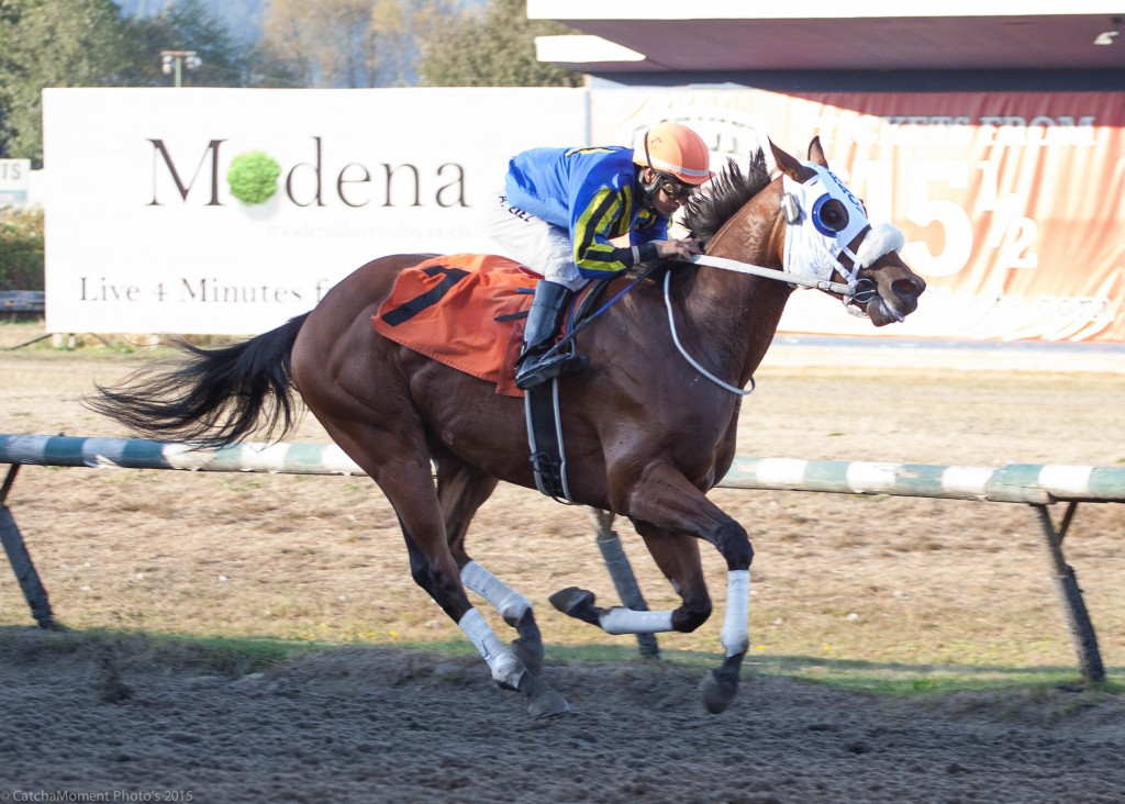 WINE STOCK GATE TO WIRE IN 6TH AT HASTINGS - PATTI TUBBS PHOTO
