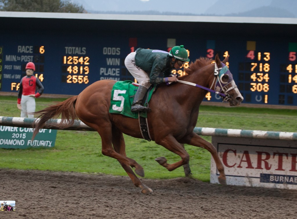 IRISH ROMEO SEEN HERE WINNING THE SIXTH AT HASTINGS - PATTI TUBBS PHOTO