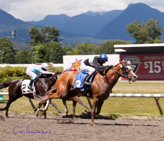 SWIFT THOROUGHBREDS, SNUGGLES SEEN HERE WINNING THE EMERALD DOWNS STAKE ON SUNDAY AFTERNOON AT HASTINGS - PATTI TUBBS PHOTO